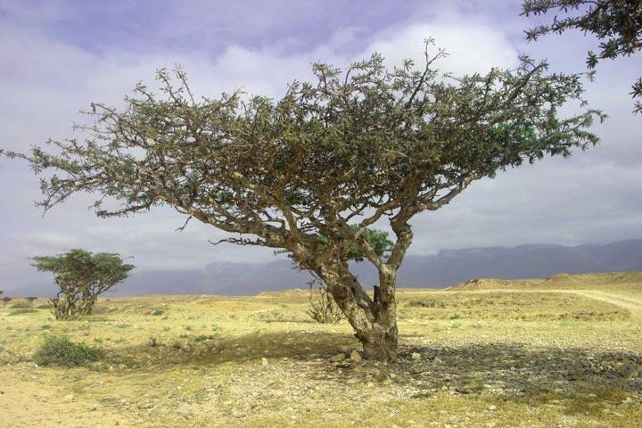 jf-tree